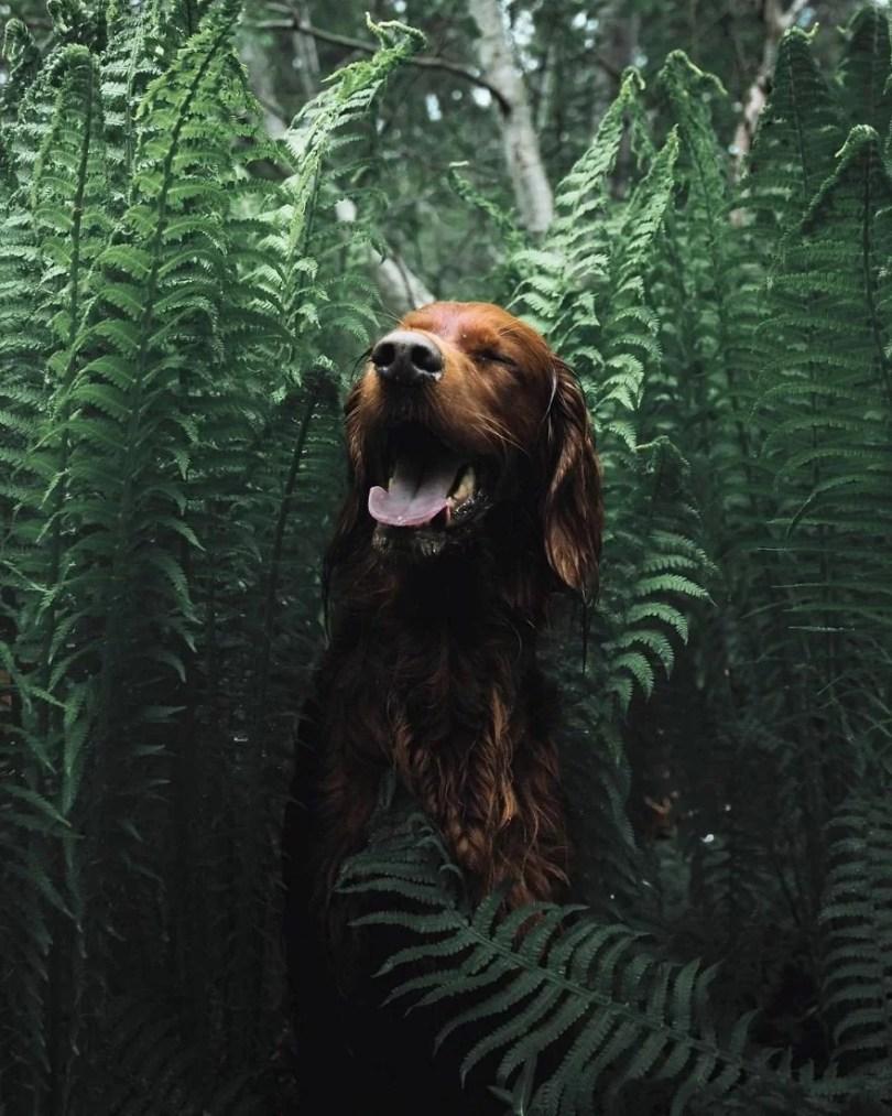 foto de cachorro 16 - Foto de cachorro: Dono faz book fotográfico de seu cão