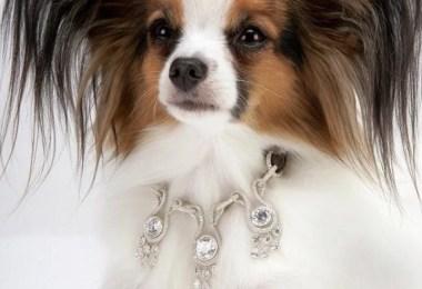 Amour Amour Dog Collars - Você daria este colar para seu Pet?