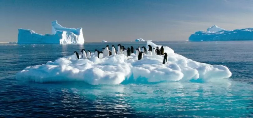 pinguins na antartida - Fatos sobre a Antártica que você provavelmente ainda não sabia (Parte 2)
