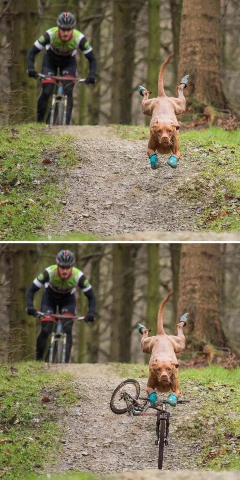 photoshop engraçado21 - 21 fotos mais engraçados  e criativas transformadas pelo Photoshop