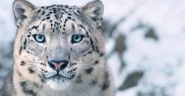 Animais que podem ser extintos Fotógrafo profissional tirou fotos incríveis - Maiores canais do Youtube Brasil 2019