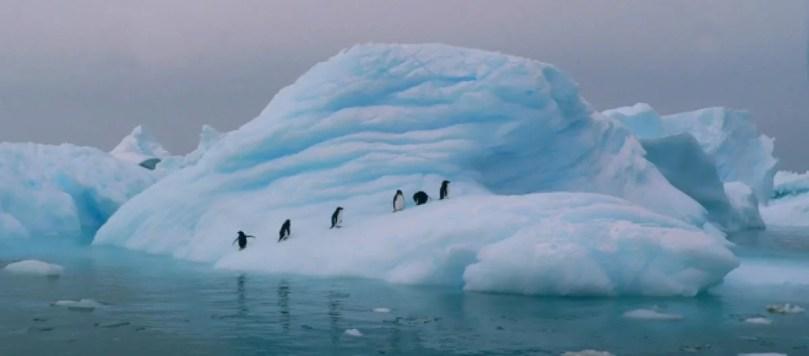 antartica esta entre o top 10 mais frios do mundo 639355 - Cientistas propõem pulverizar toneladas de água do mar congelada na Antártica
