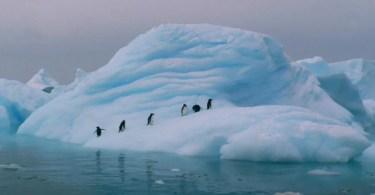 antartica esta entre o top 10 mais frios do mundo 639355 - Dia de abertura da Disneylândia em 1955