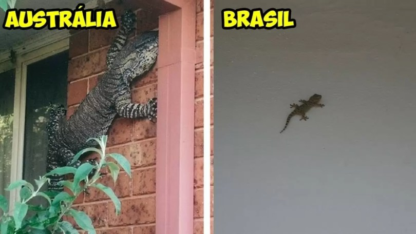 australia bichos lagartixa crocodilo - 40 Fotos que provam que a Australia não é para qualquer um