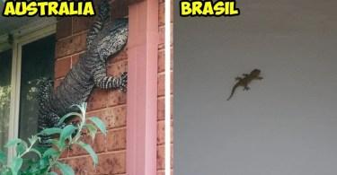 australia bichos lagartixa crocodilo - Mulheres e as coroas florais tradicionais de seu país