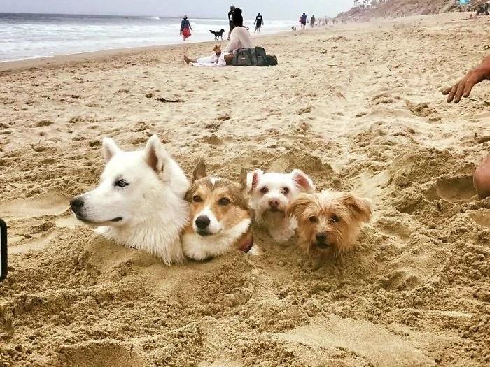 coisas engraçadas na praia - Coisas interessantes que as pessoas encontraram na praia