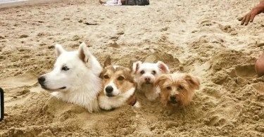 coisas engraçadas na praia - Fotógrafo jogou pó colorido em cachorros e as fotos você precisa ver