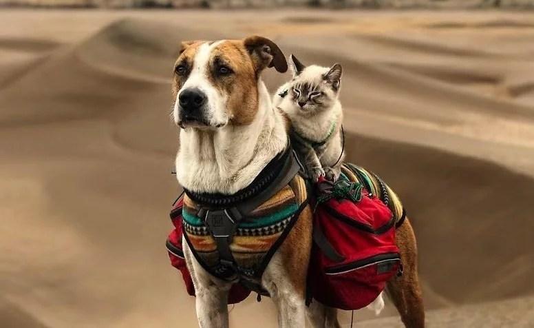 como cao e gato amigos inseparaveis - Como cão e gato - Esses amigos são inseparáveis