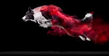 fotos de cachorros - 30 criativas tatuagens conectadas entre pessoas