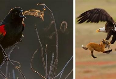 audubon photography awards 2019 winners thumb640 - Os vencedores dos prêmios Audubon Bird Photography 2019 foram anunciados