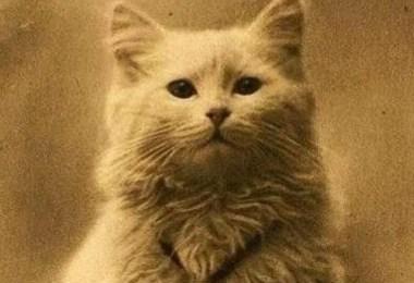 primeria foto deum gato - A primeira foto de uma gato registrada na história