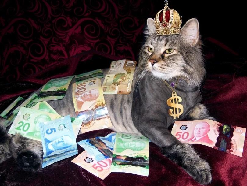 homem mais rico gato - Você teria que trabalhar 2,8 milhões de anos para ganhar tanto quanto homem mais rico do mundo