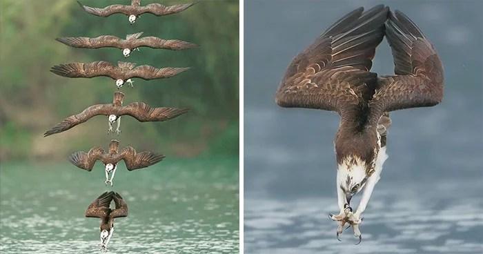 aguia de caça - Fotógrafo de Taiwan tira fotos artísticas de pássaros de caça e o resultado é lindo