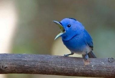 passaro do twitter - Qual foi o primeiro Twitter de todos?