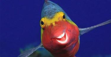peixe feliz - As fotos mais fofas e engraçadas de 2020 do mundo animal!