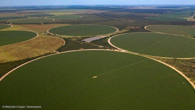 Em Barreiras, município localizado no oeste da Bahia, sistema de pivô central de irrigação usado em plantações de soja para aumentar o número de colheitas por ano.