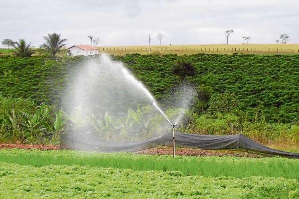 Irrigação está liberada