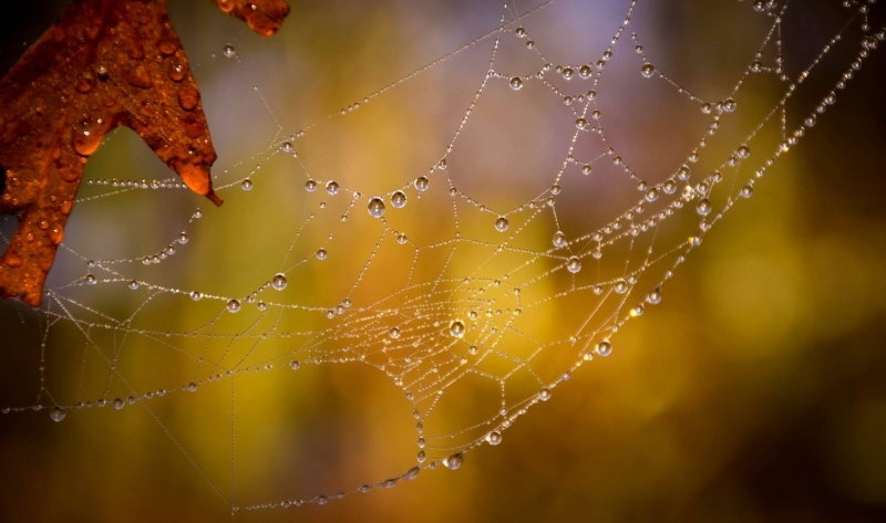 Time to Clean up your home – Spider Season is Here!