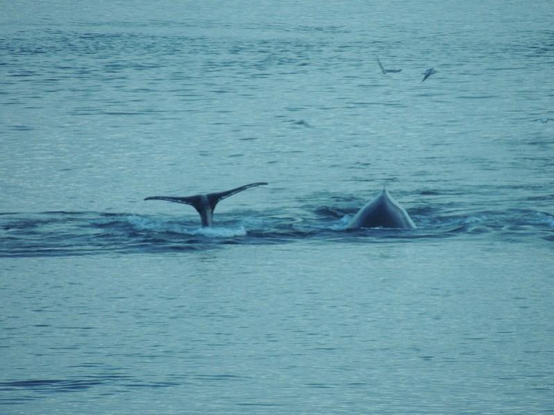 whales3.jpg