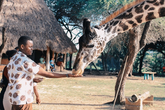 adult-adventure-africa-1670732 (1)