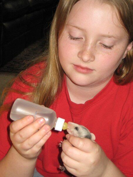 Feeding a baby 'possum by Mid-Life Blogger