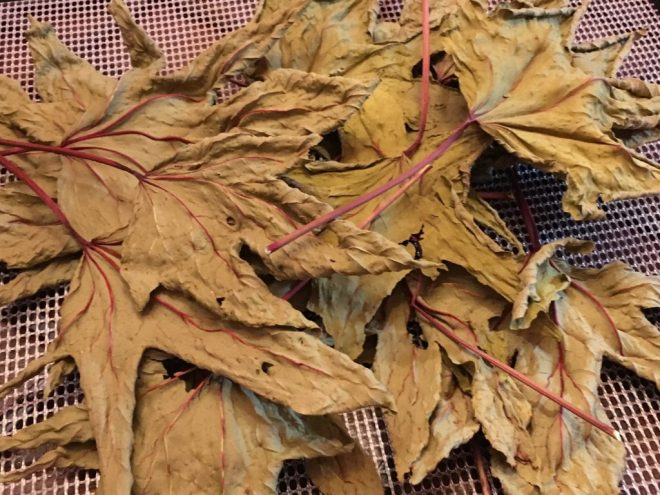 Dried Thai Roselle Leaves