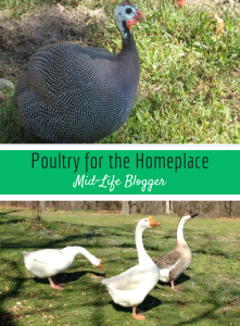 Poultry for the Homeplace