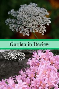 Garden in Review