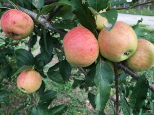 Simple Pleasures ~ Fruit Trees