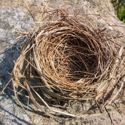 How My Husband and I Feel About Our Empty Nest