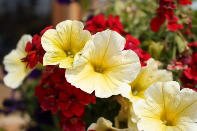 Alaskan Tour Flowers