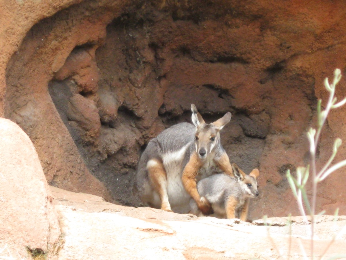 Our 2009 Road Trip Part 20 Omaha S Wild Kingdom