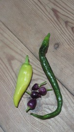 Chillis: Hungarian Hot Wax, Bolivian Rainbow and Joe's Super Long