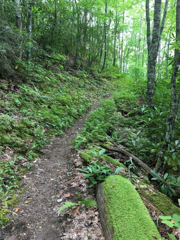 Newton Bald Trail