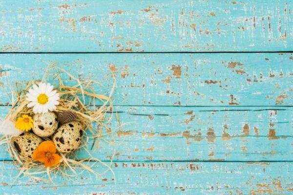 Caring for Your Midlife Nest