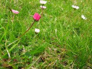 Wildflowers, Isle of Skye, Scotland