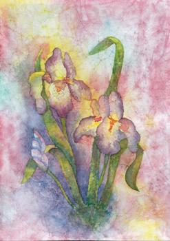 Purple iris flowers on multicolored background