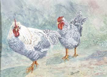 White chickens.