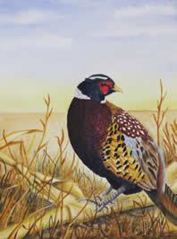 Pheasant sitting in brown grass.