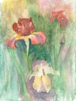 Red and white iris flowers on multicolored background.