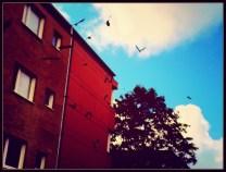 Birds of doom