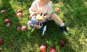 Organic Apple Picking near Montreal
