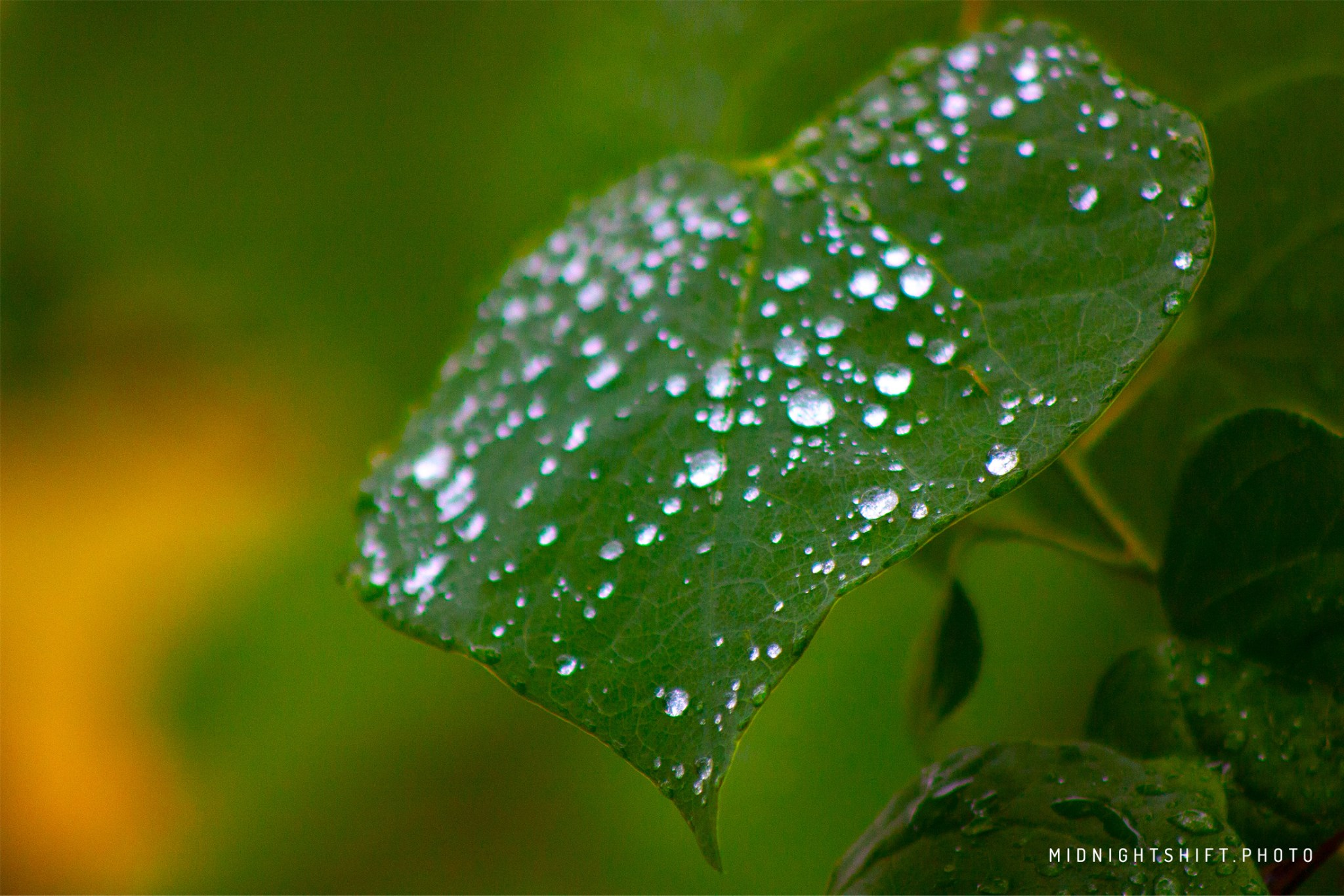 Rain droplets collect on a leaf