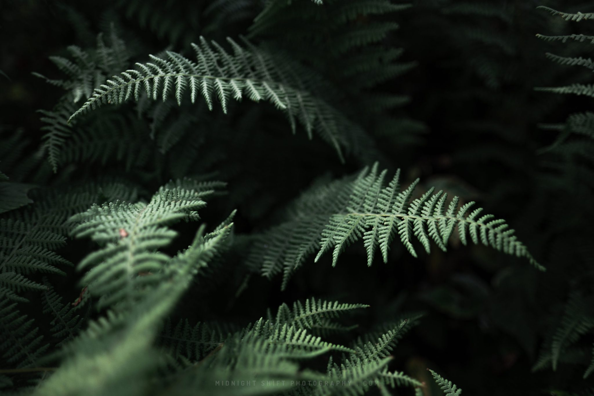 Sun rays shine down on some ferns through the trees