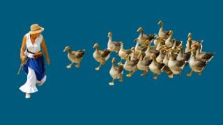 duck-man