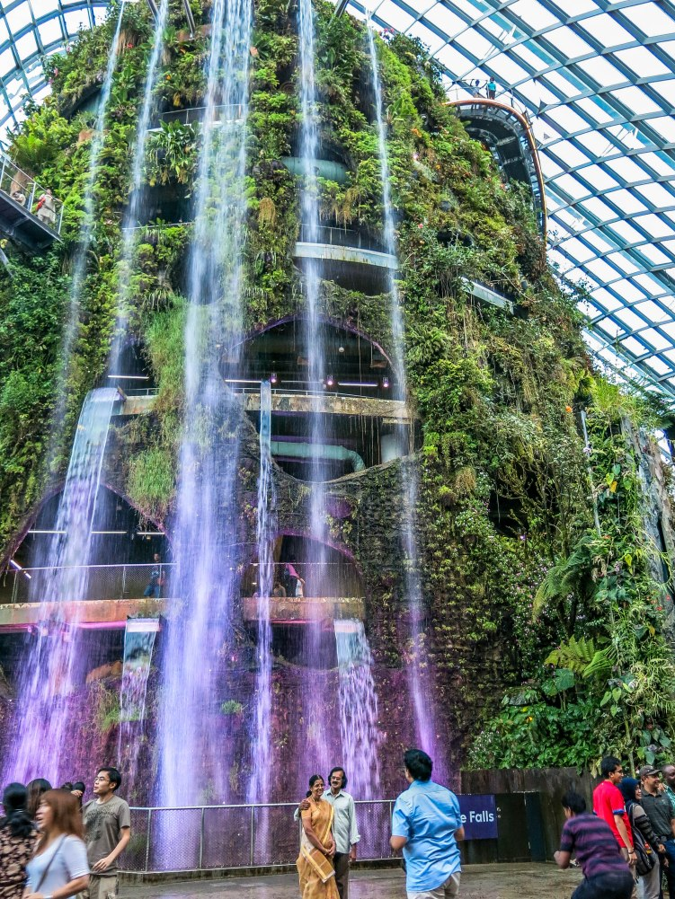 the other half of the cool conservatories, Cloud Forest. This houses a variety of ferns and other tropical plants.