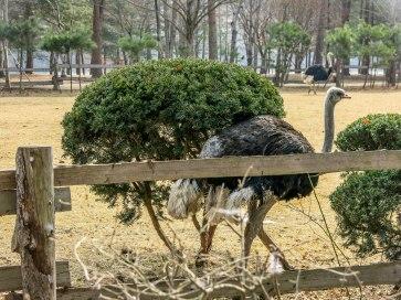 Ostrich! :3