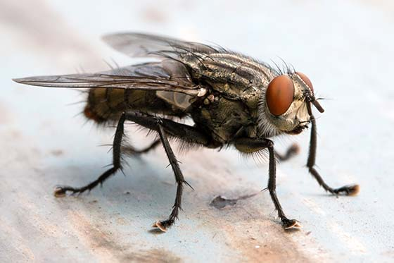 cluster_fly2