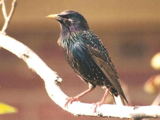 wildlife control north carolina