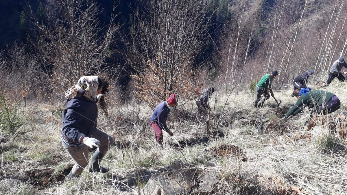 People Planting Trees in Romania